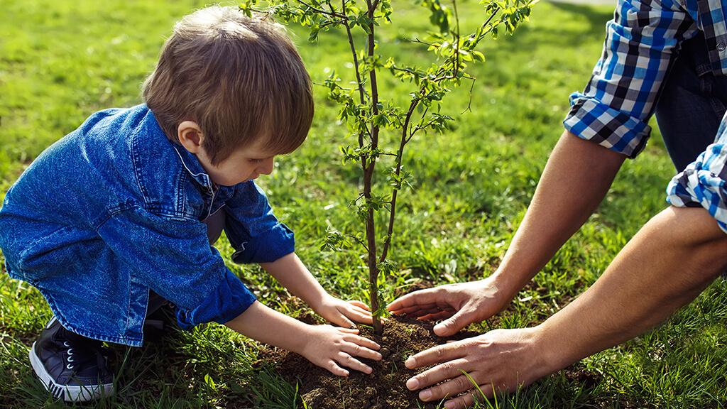 Сын с отцом сажают дерево