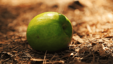 Зеленное яблоко