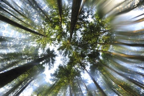 Вместо дорогой оптики – вазелин
