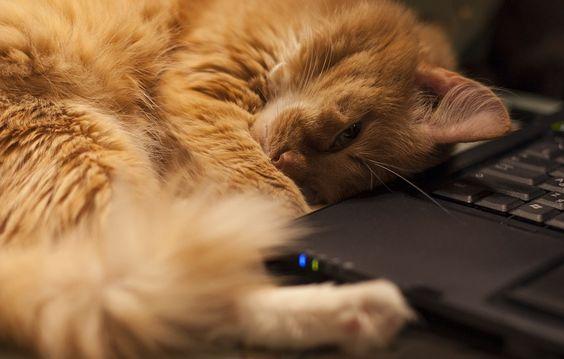 Дресс-код: кот на коленках